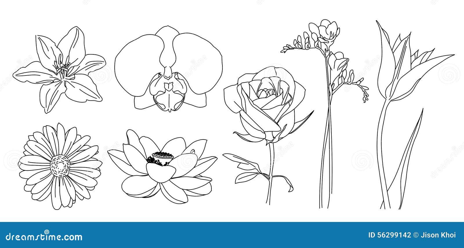 Flowers vector outline stock illustration. Illustration of