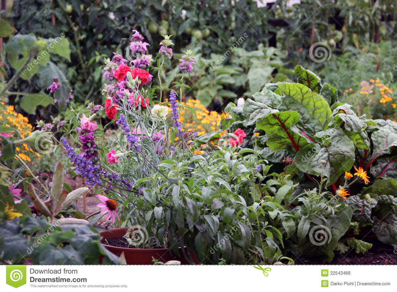 Flowers and vegetable garden bed stock photo image 22543466 Flowers to plant in vegetable garden