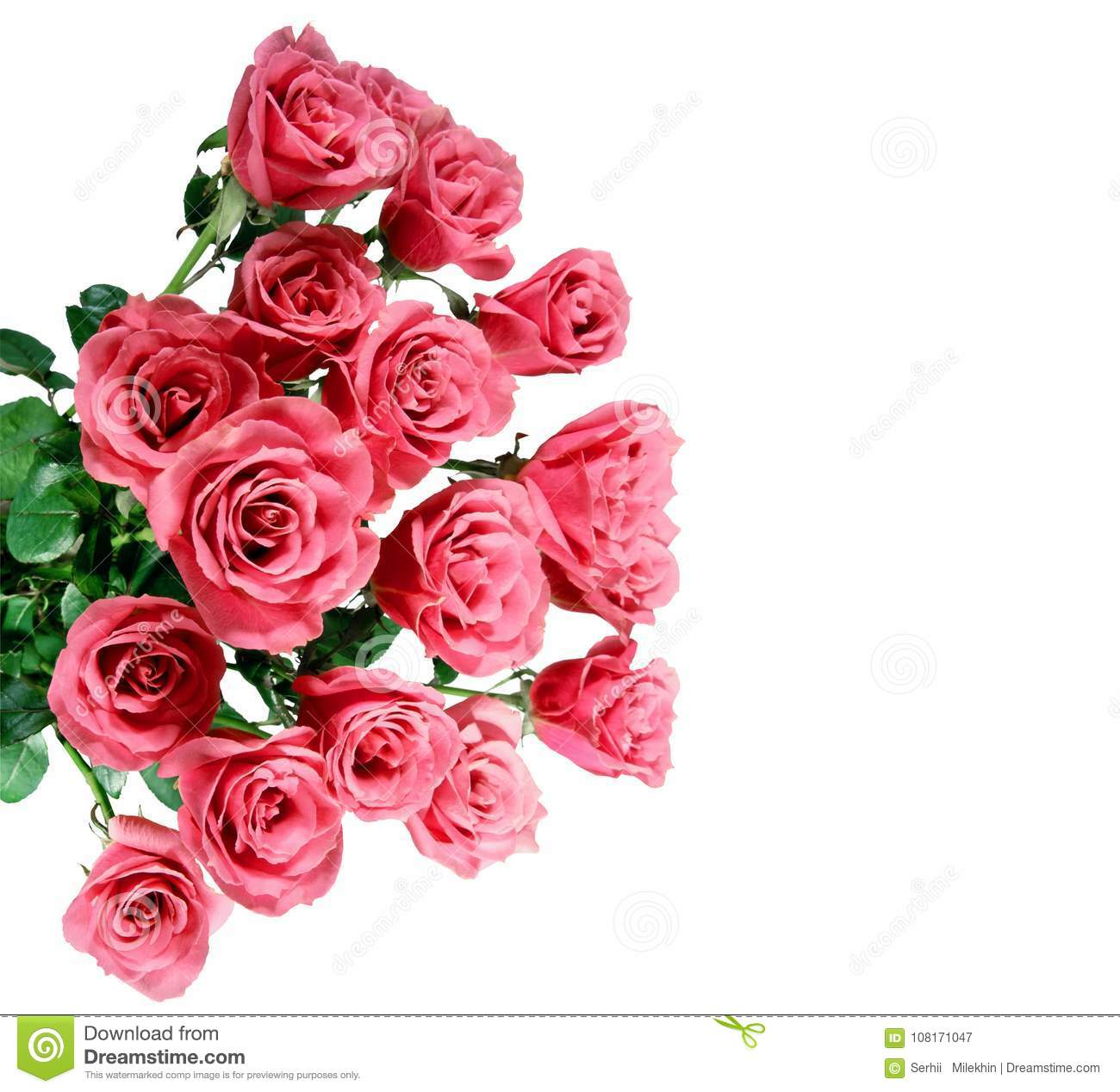 Flowers wall background with amazing roses stock image image of flowers wall background with amazing roses izmirmasajfo