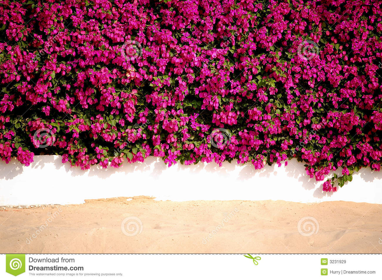Flowers Wall Sand Royalty Free Stock Image