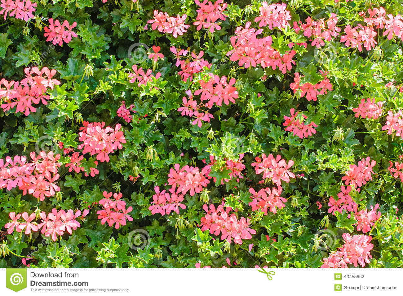 Flowers Wall Stock Photo Image Of Summer Green Natural 43455962