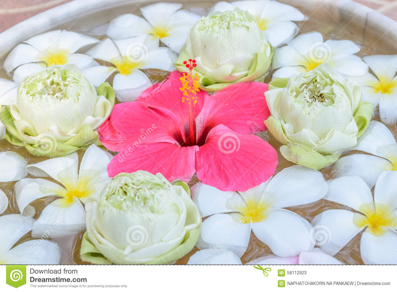 Flowers In The Water Backgrounds Stock Image Image Of Beautiful