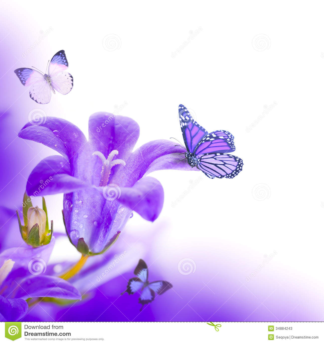 Purple flower background with butterfly free best hd wallpapers flowers on a white background mightylinksfo