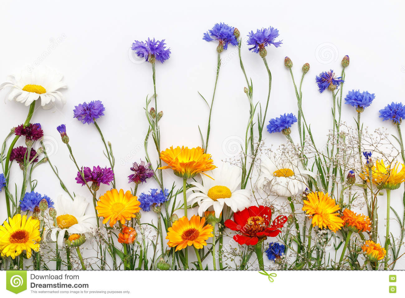 Flowers on white background top view flat lay stock image image frame with flowers on white background top view flat lay mightylinksfo