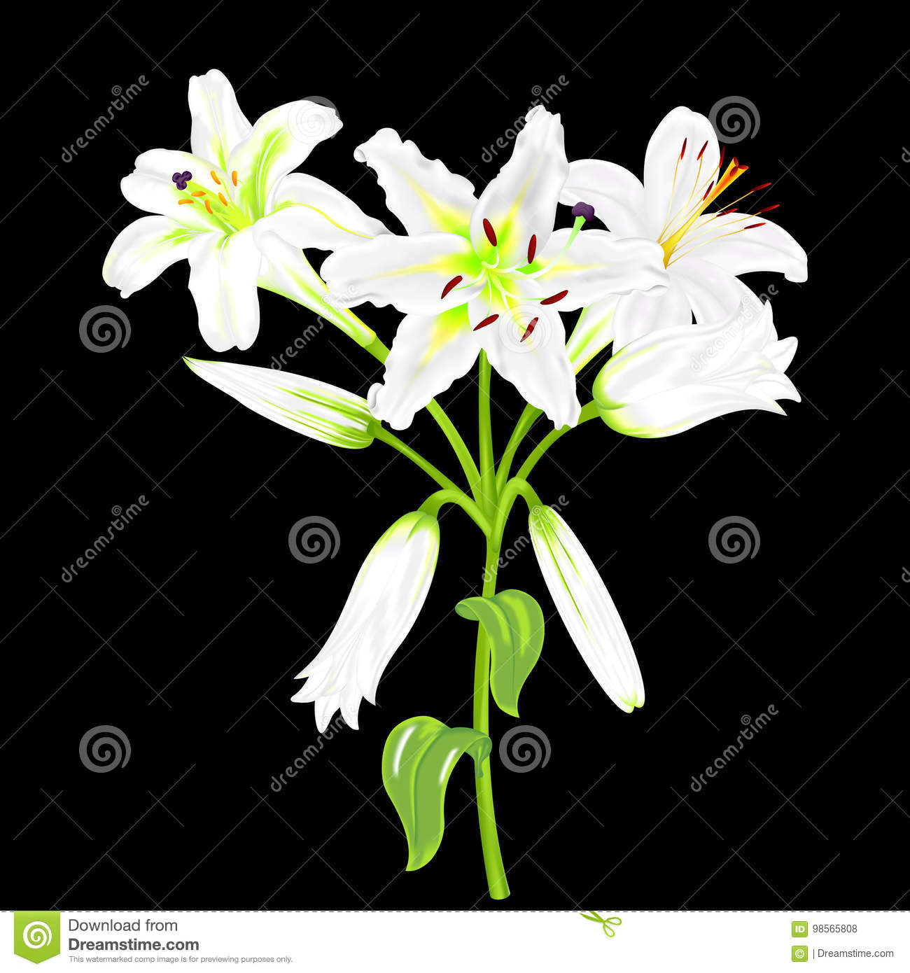 Flowers Of White Lilies On A Black Background Stock Vector