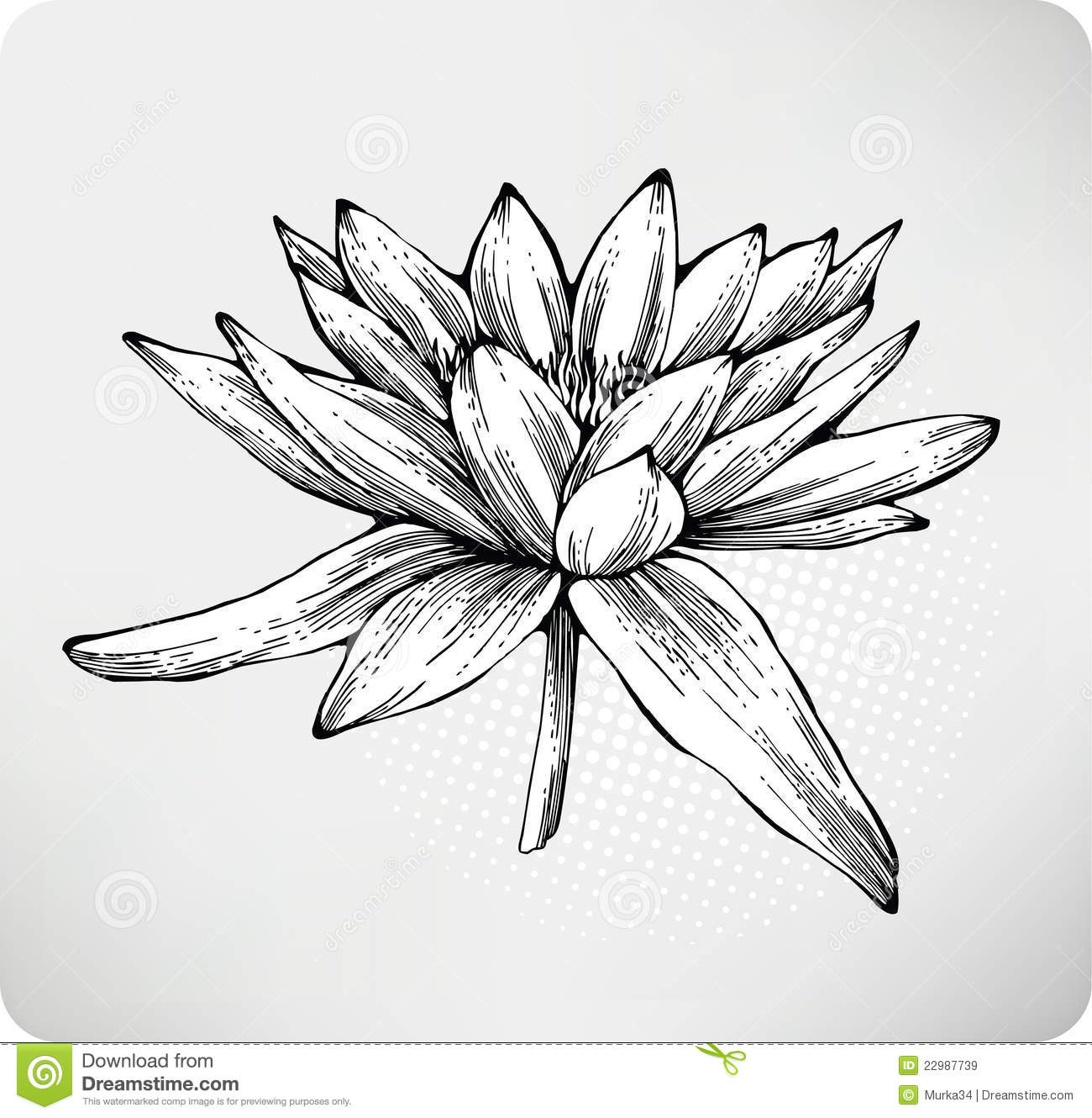 Flowers white water lily hand drawing stock vector illustration of flowers white water lily hand drawing izmirmasajfo