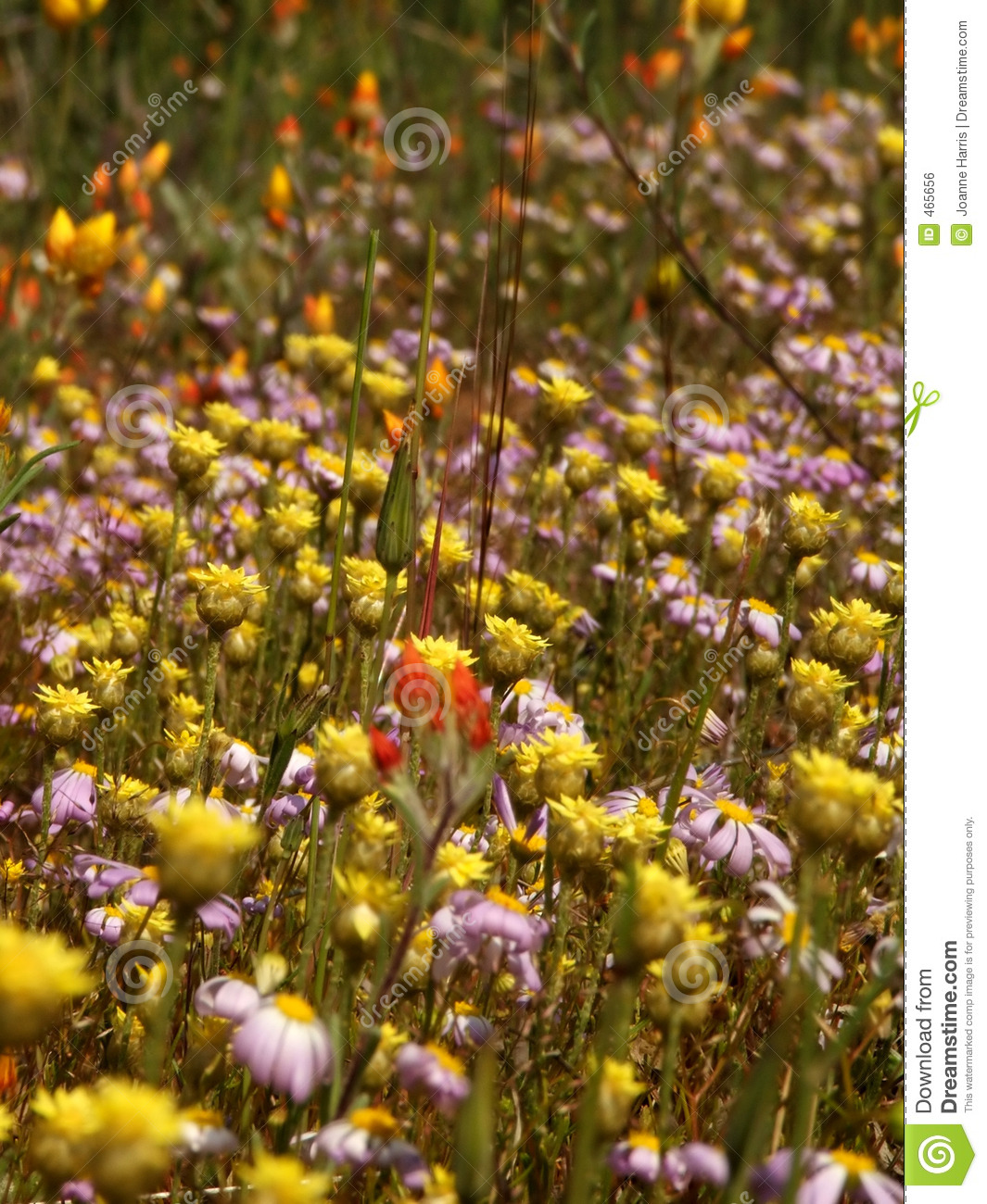 Download Flowers - Wildflowers stock photo. Image of western, floral - 465656