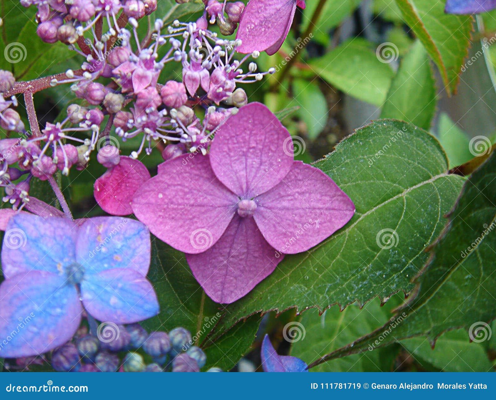 Flowertouchcolor