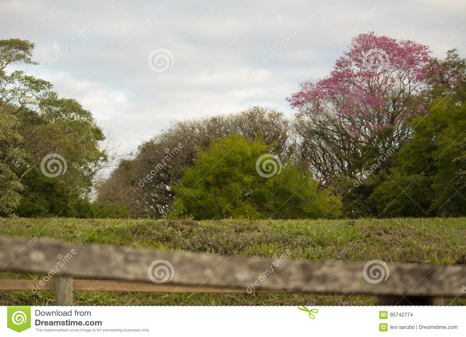 Flowery δέντρο με τα ζωηρόχρωμα λουλούδια