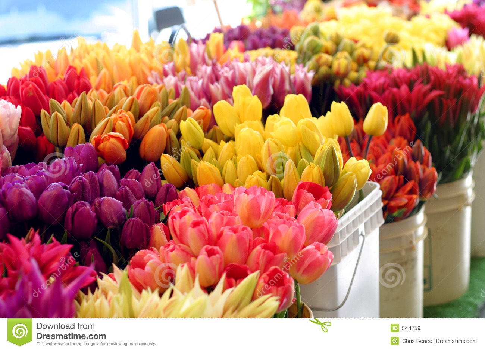 Download Flowrs市场 库存图片. 图片 包括有 装饰, 颜色, 供营商, 欢悦, 精美, 工厂, brewster - 544759