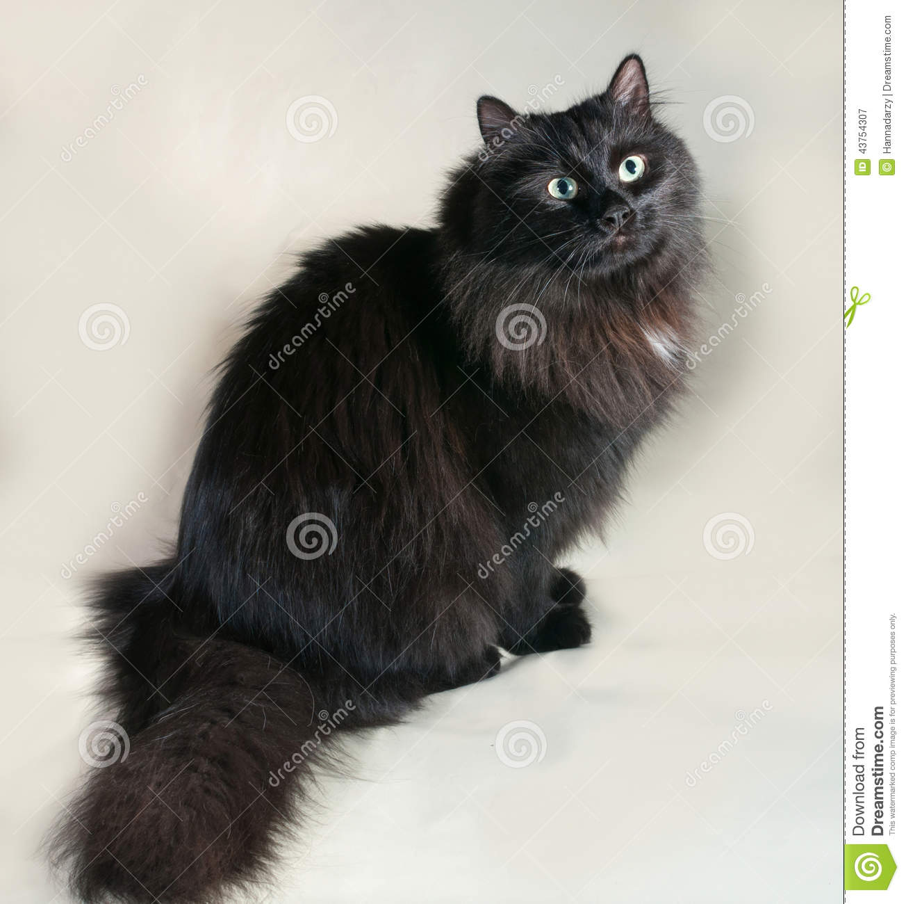 Black Fluffy Cat With Green Eyes