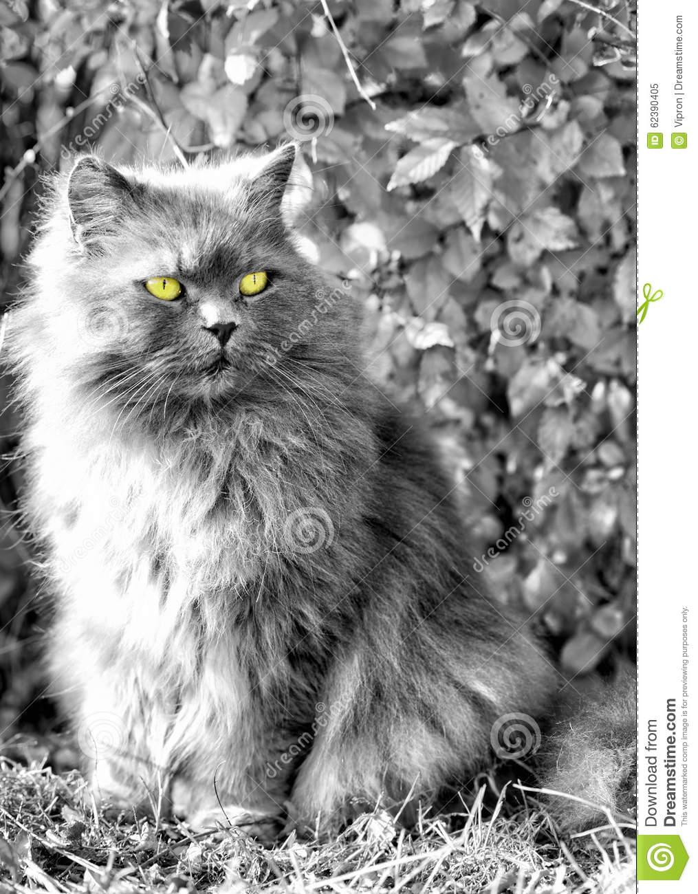 Fluffy cat looking away
