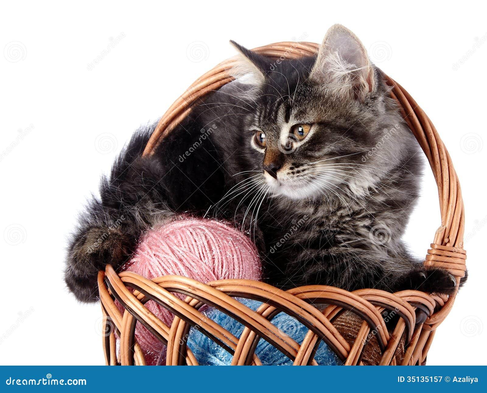 countrycat arctic cat
