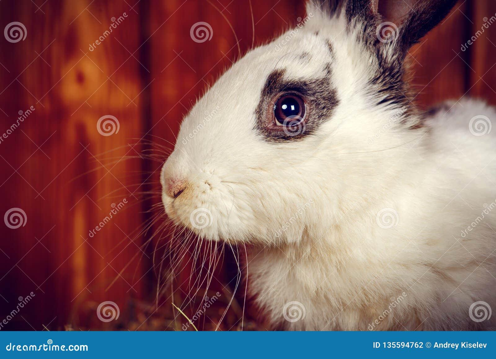 Fluffy easter bunny