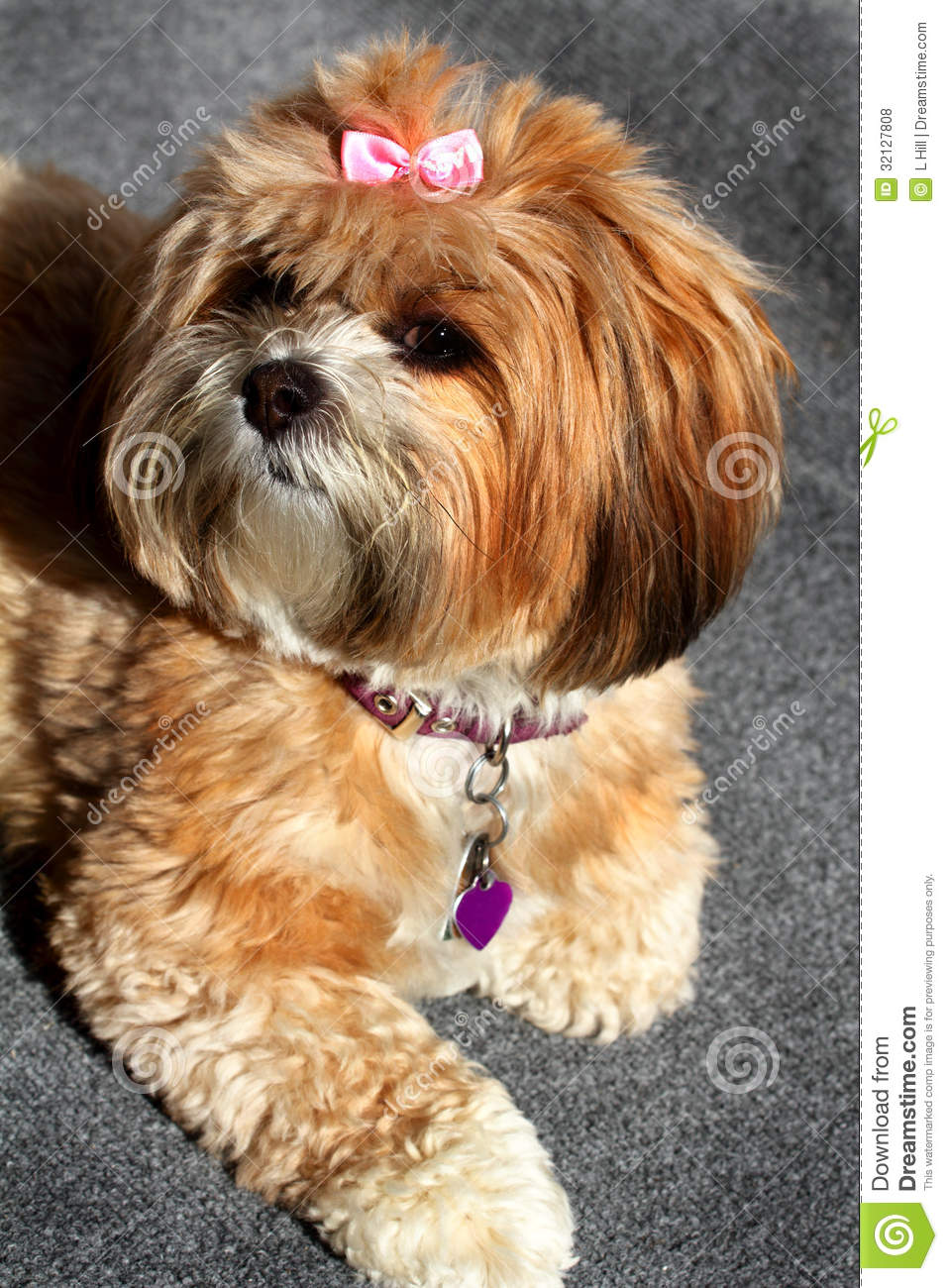 Fluffy Pooch Royalty Free Stock Photos - Image: 32127808