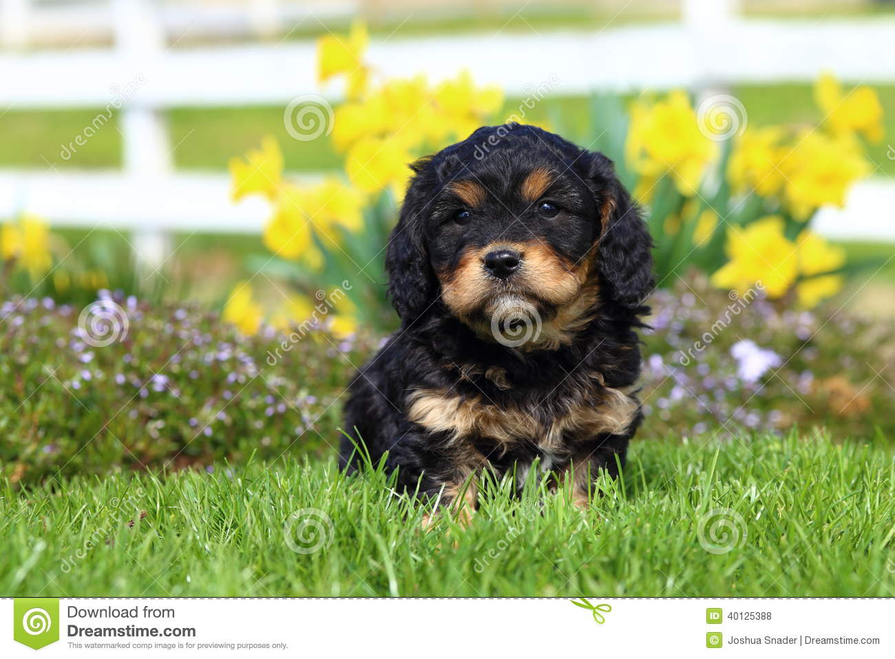 fluffy puppy sits in grass with flowers in background