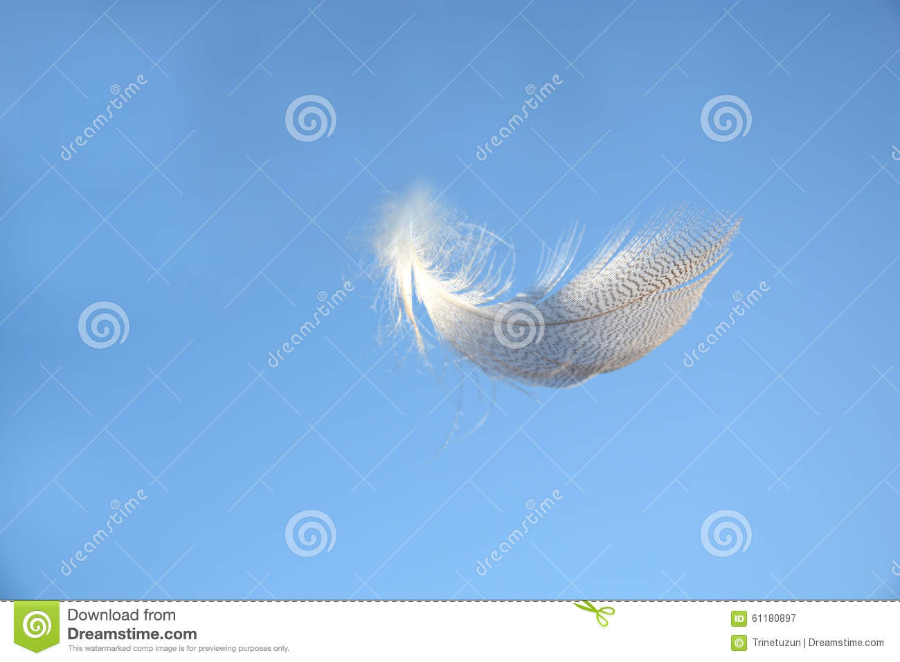 Fluffy Soft White Striped Bird Feather Floating In The