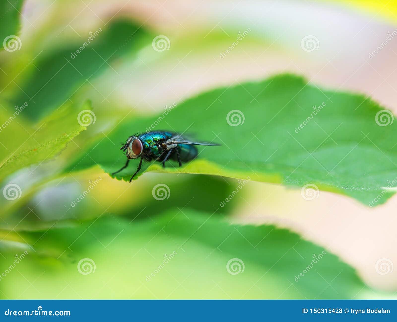 Fluga med enorm röd ögonnärbild på ett blad