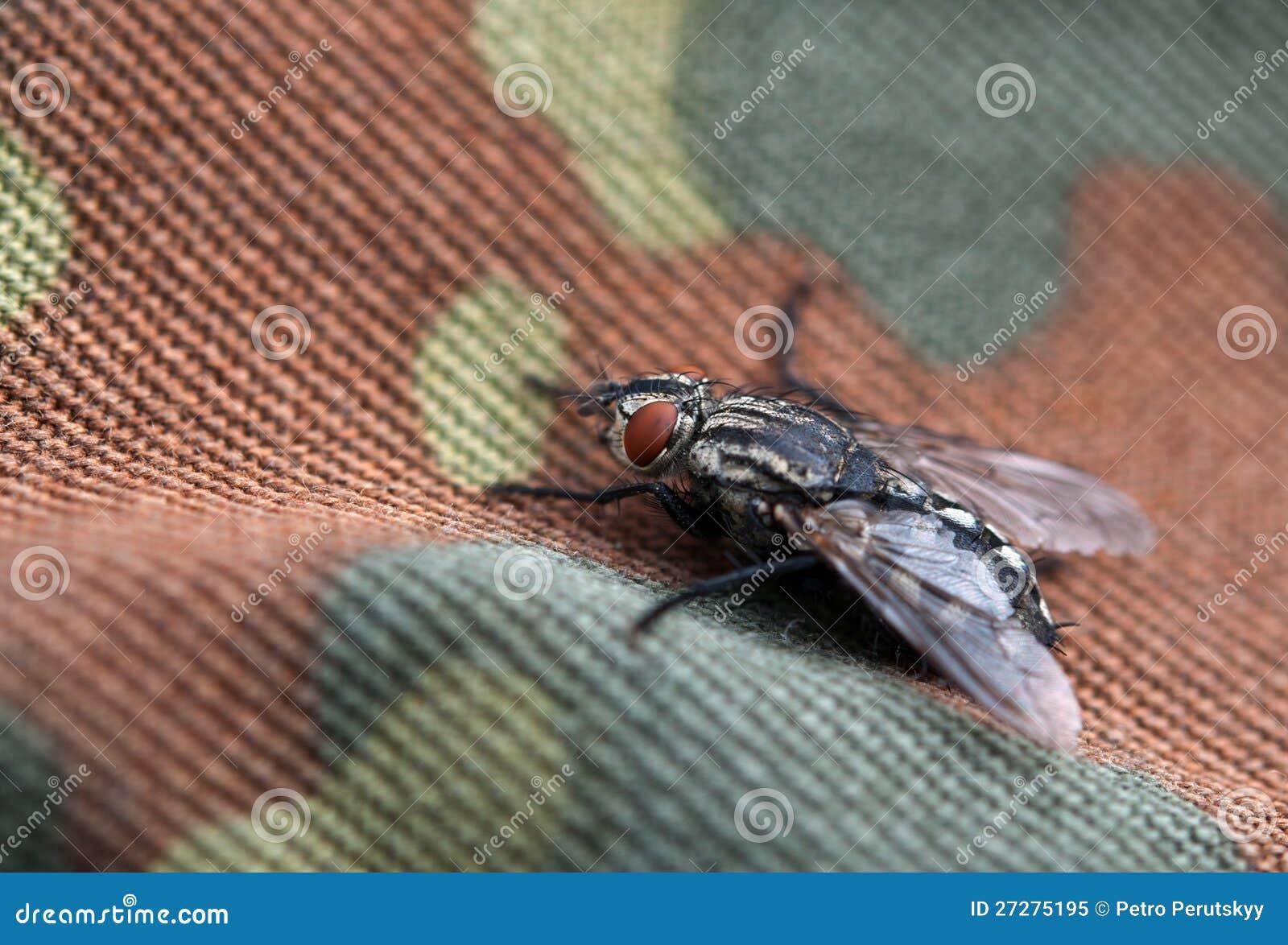 Fluga på bakgrund