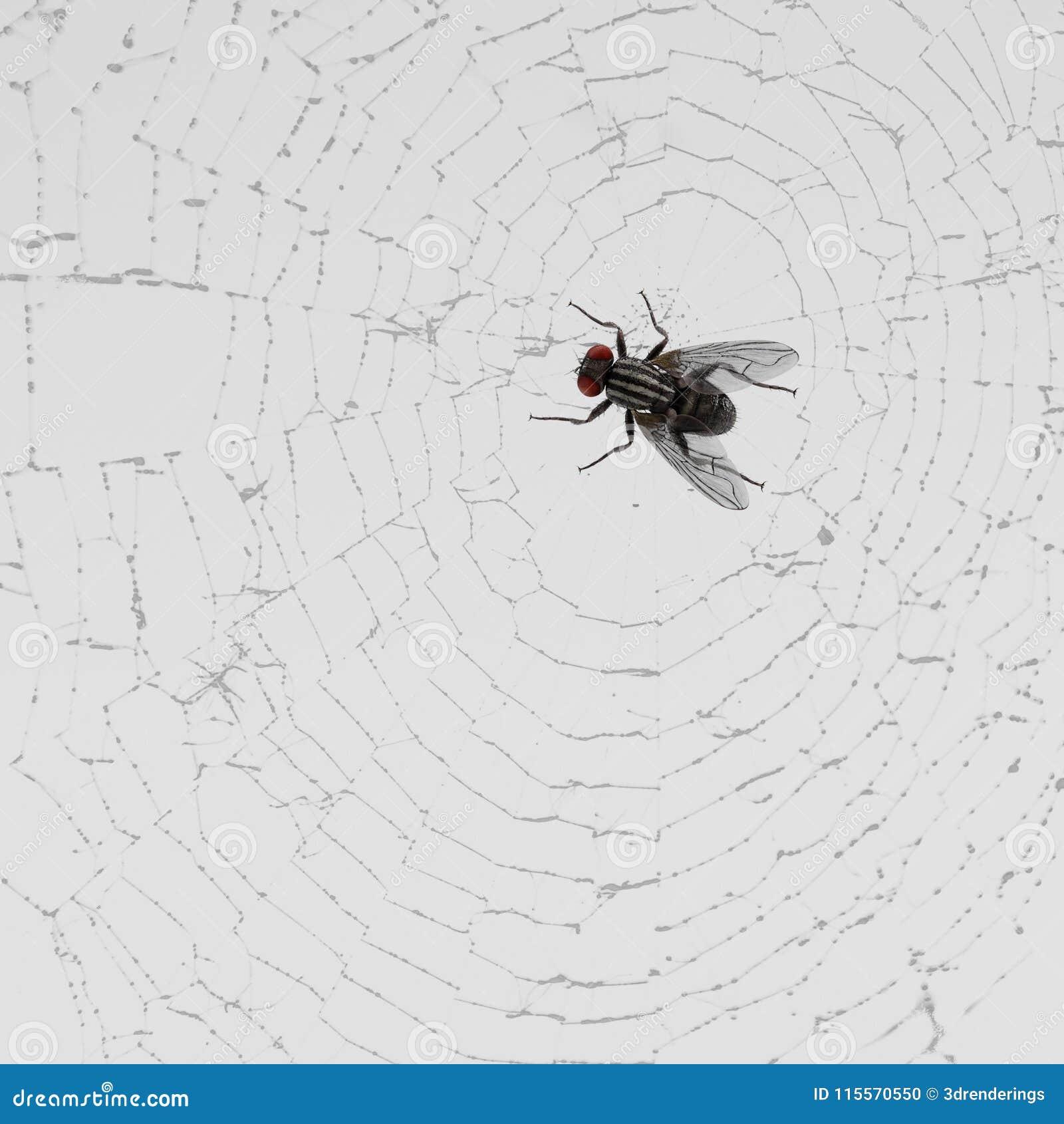 en krok upp spindel väv Europeiska hastighet dating NYC