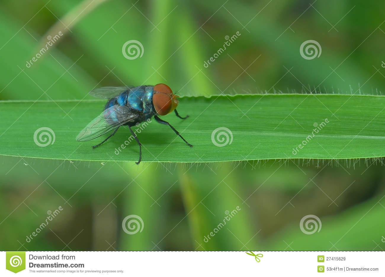 Flugan perching på den gröna leafen