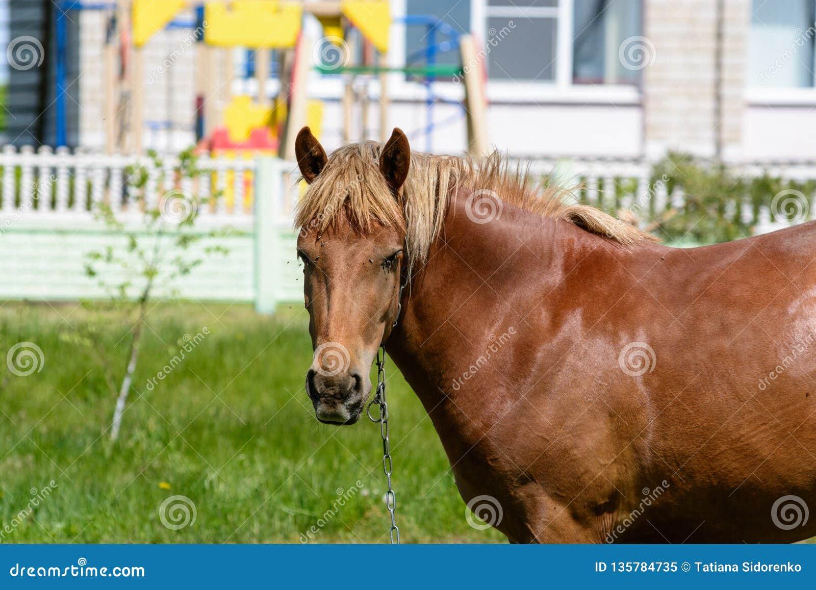 Flugor biter hästen