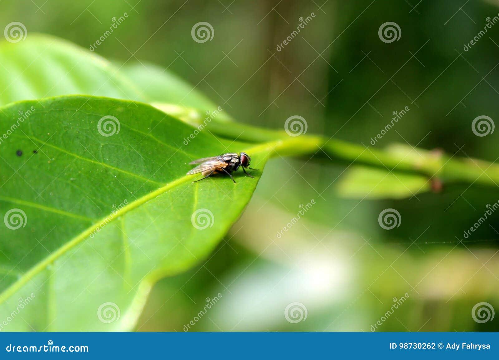 Flugor på sidor