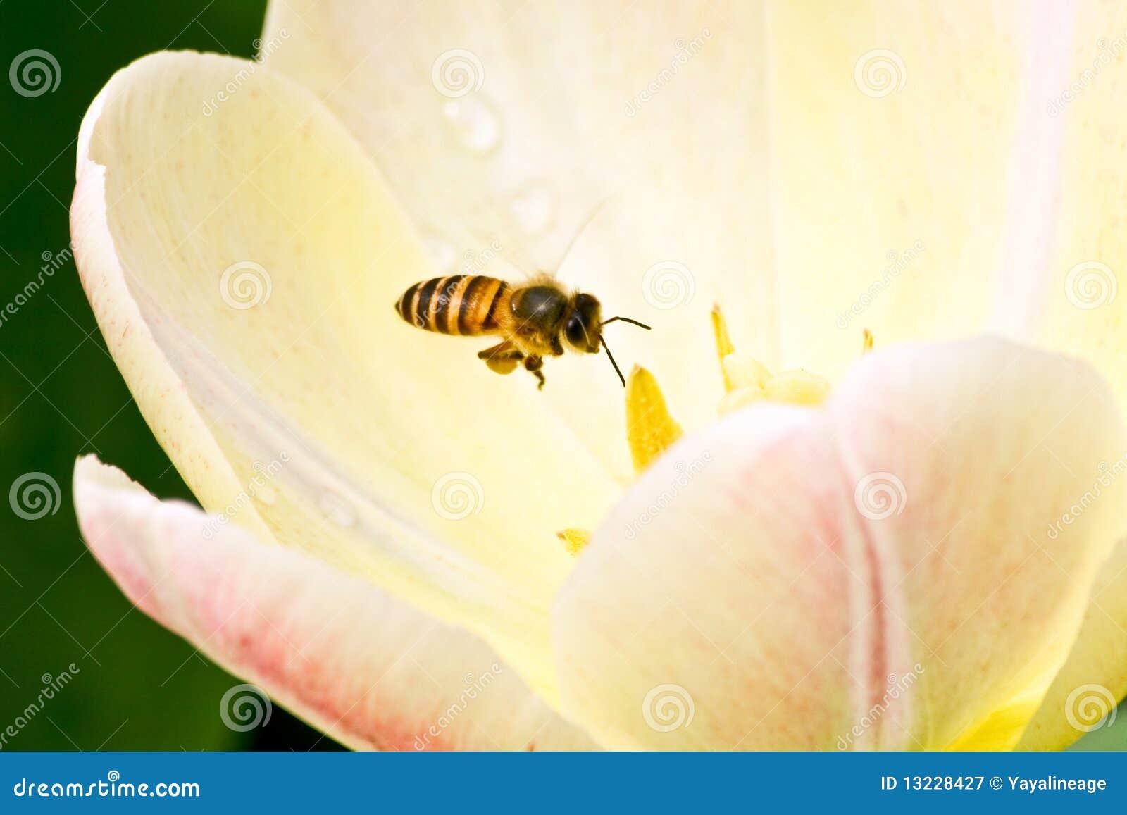 Flugwesen-Biene