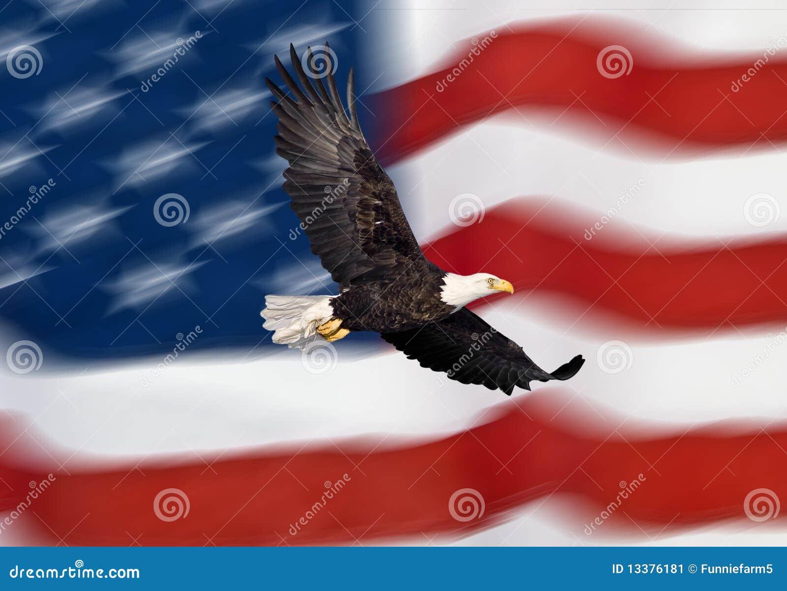 Flugwesen des kahlen Adlers vor der amerikanischen Flagge
