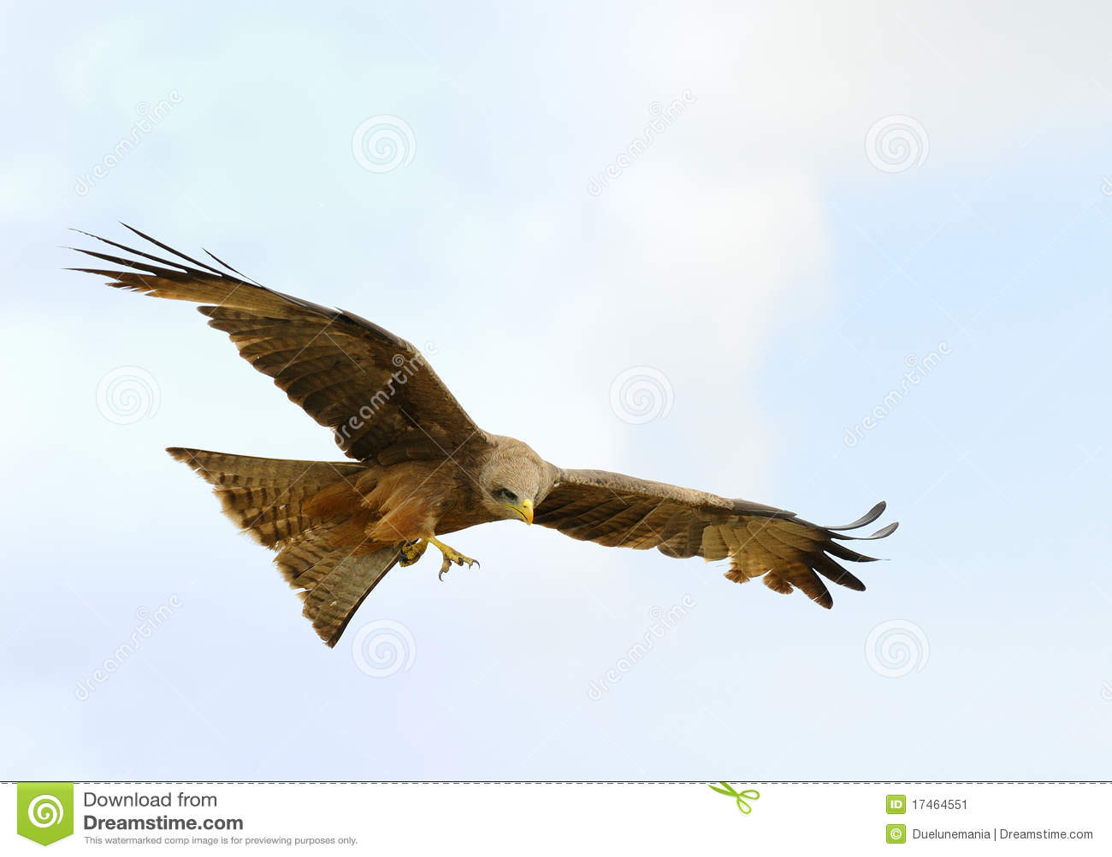 Flugwesen-Falke