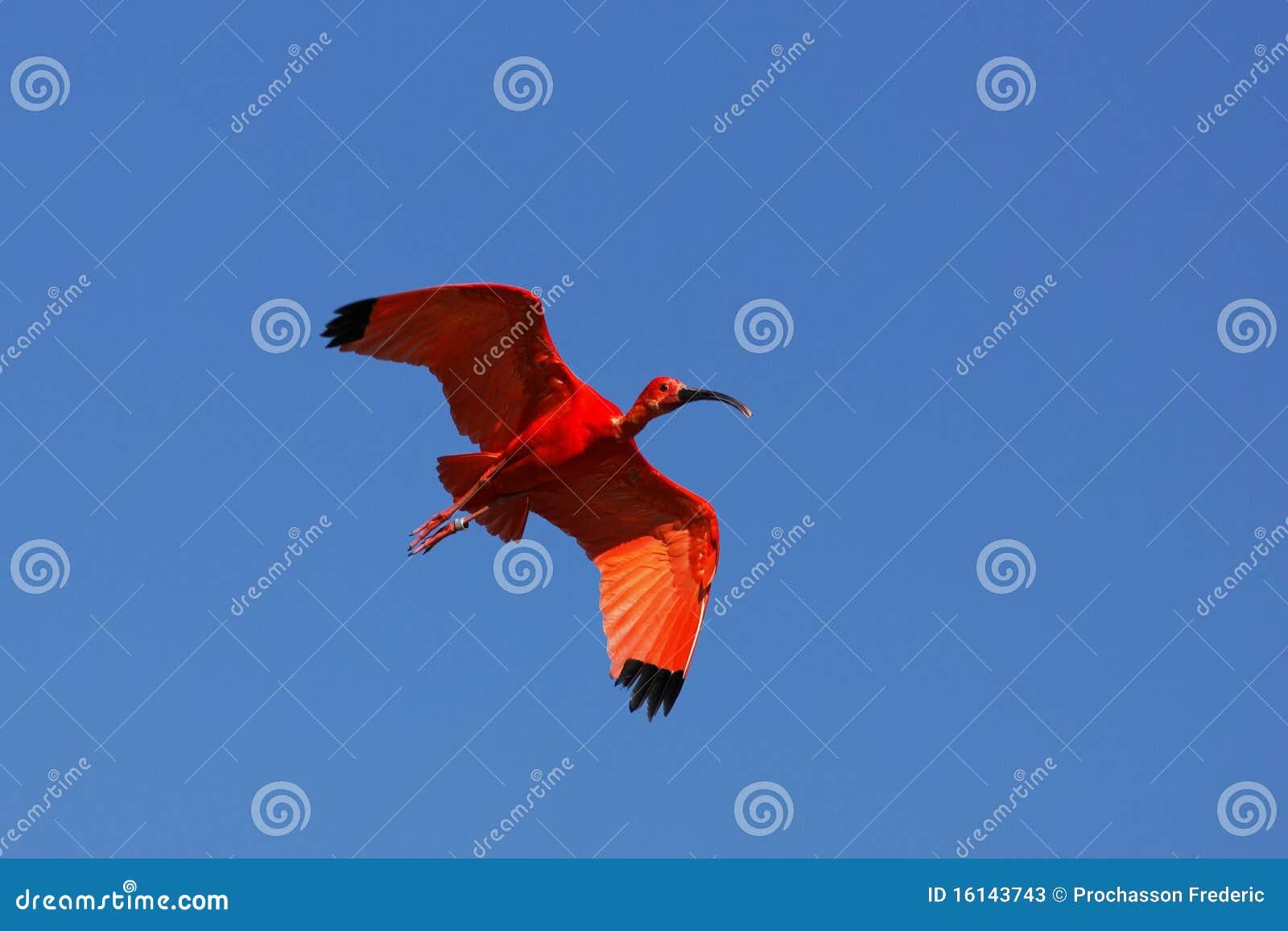 Flugwesen IBIS