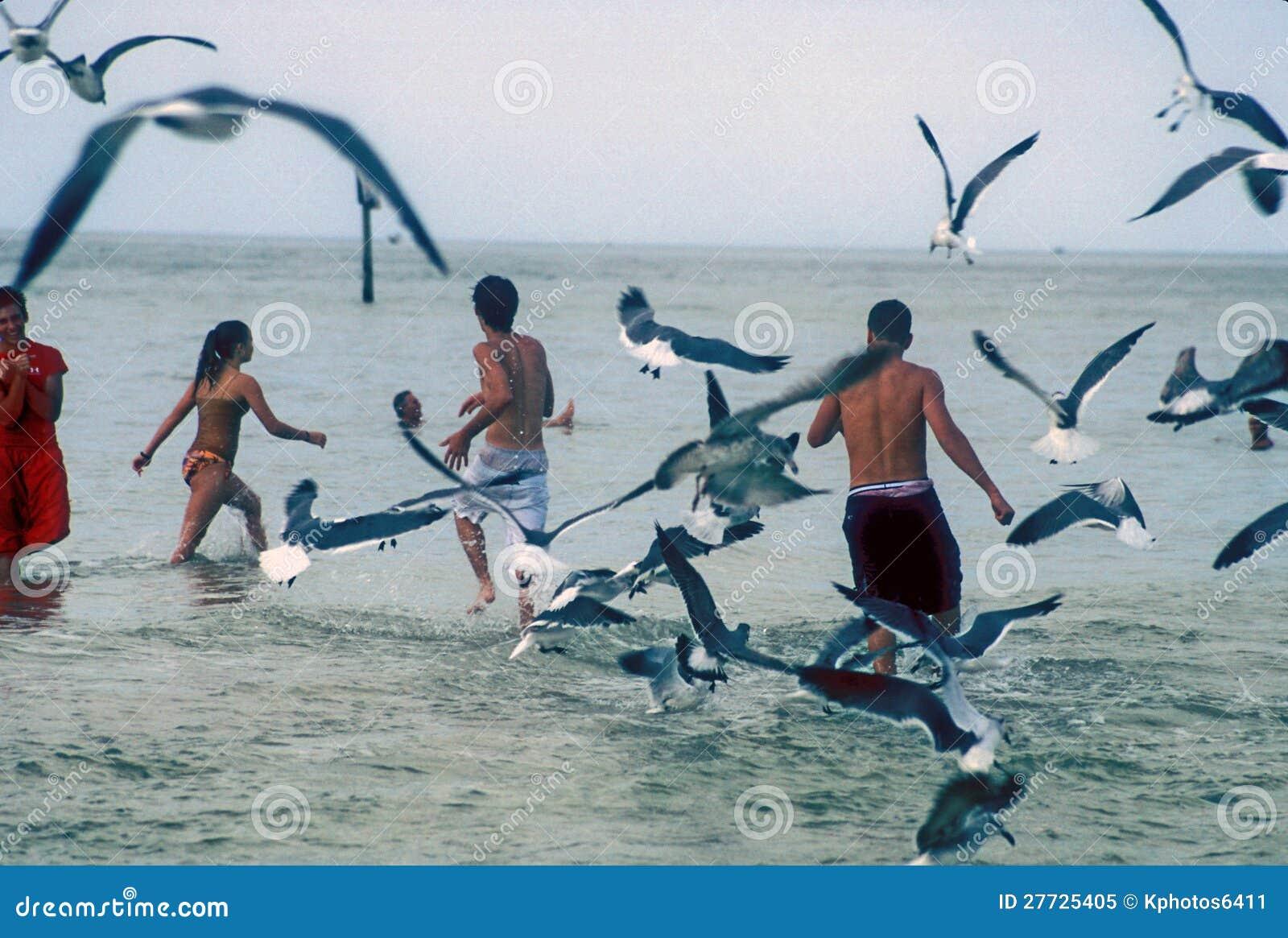 Flugwesenseemöven und Badegäste