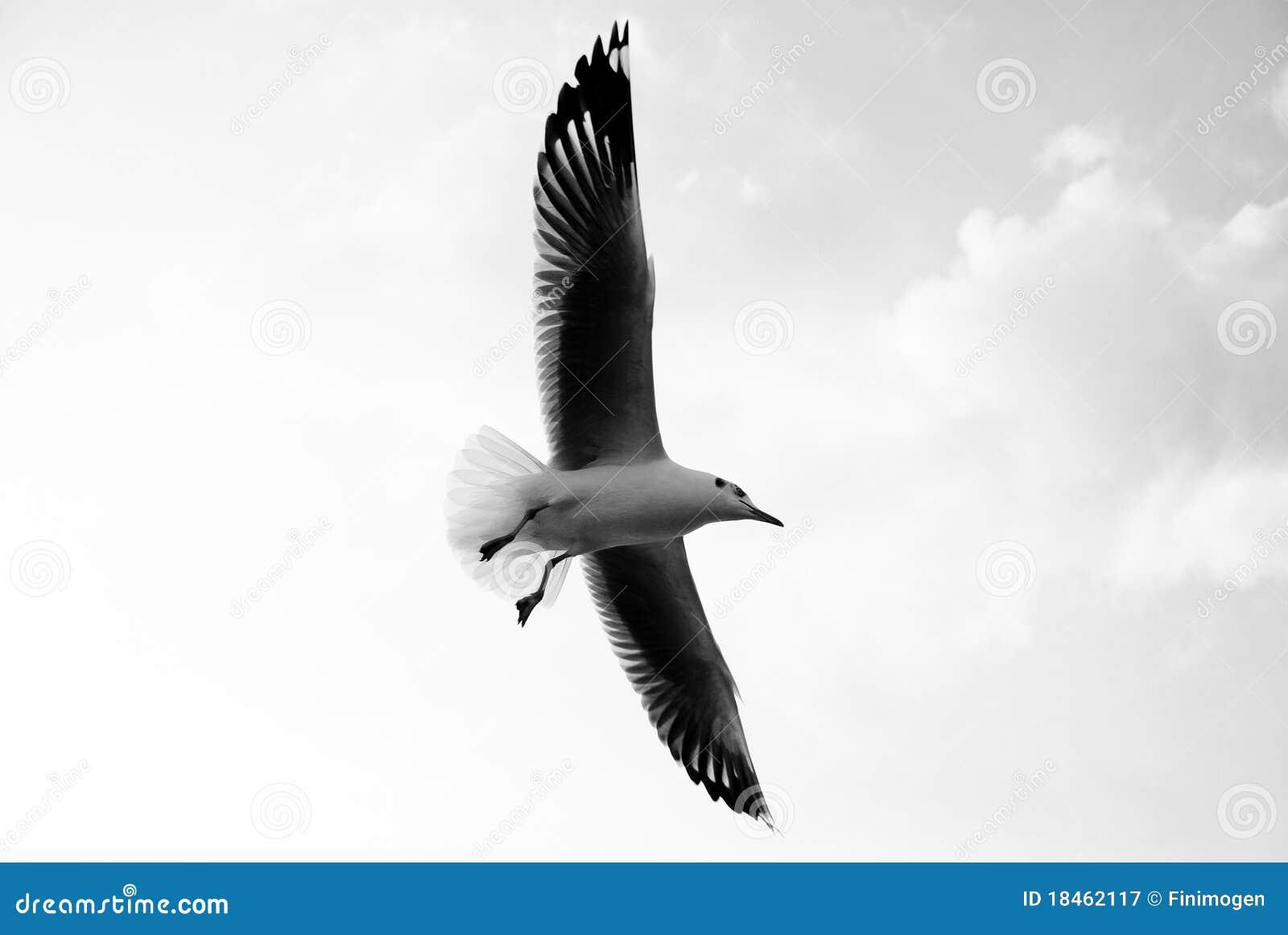 Flugwesenseemöwe