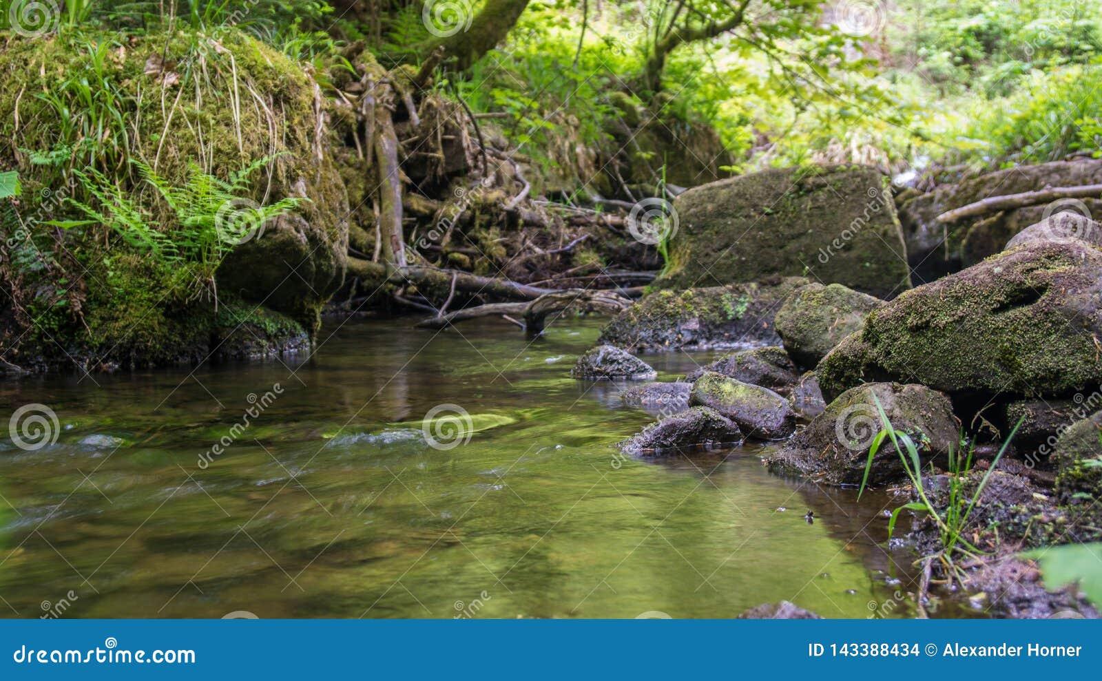 Fluss in der Holzfroschperspektive