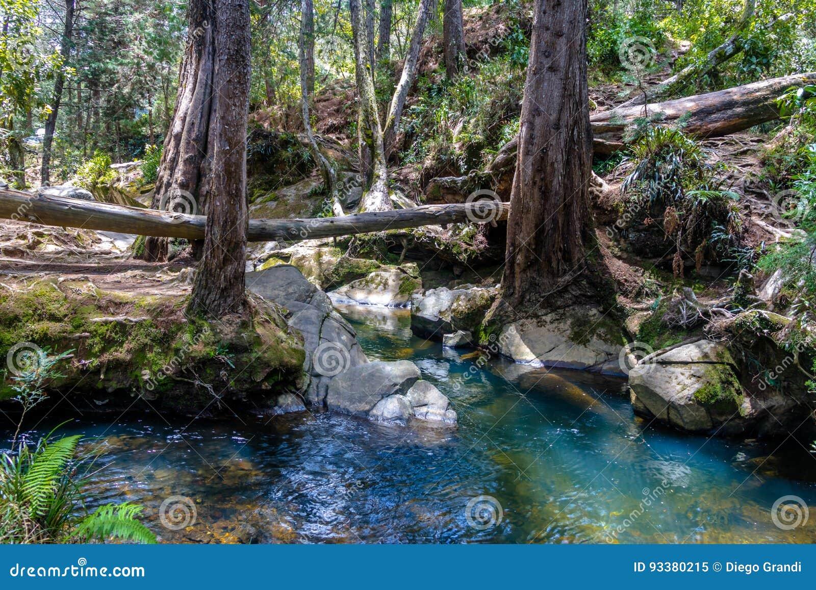 Fluss und Holz bei Arvi parkt - Medellin, Antioquia, Kolumbien