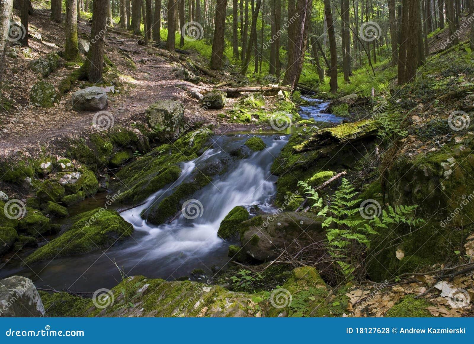 Flusso continuo del verde
