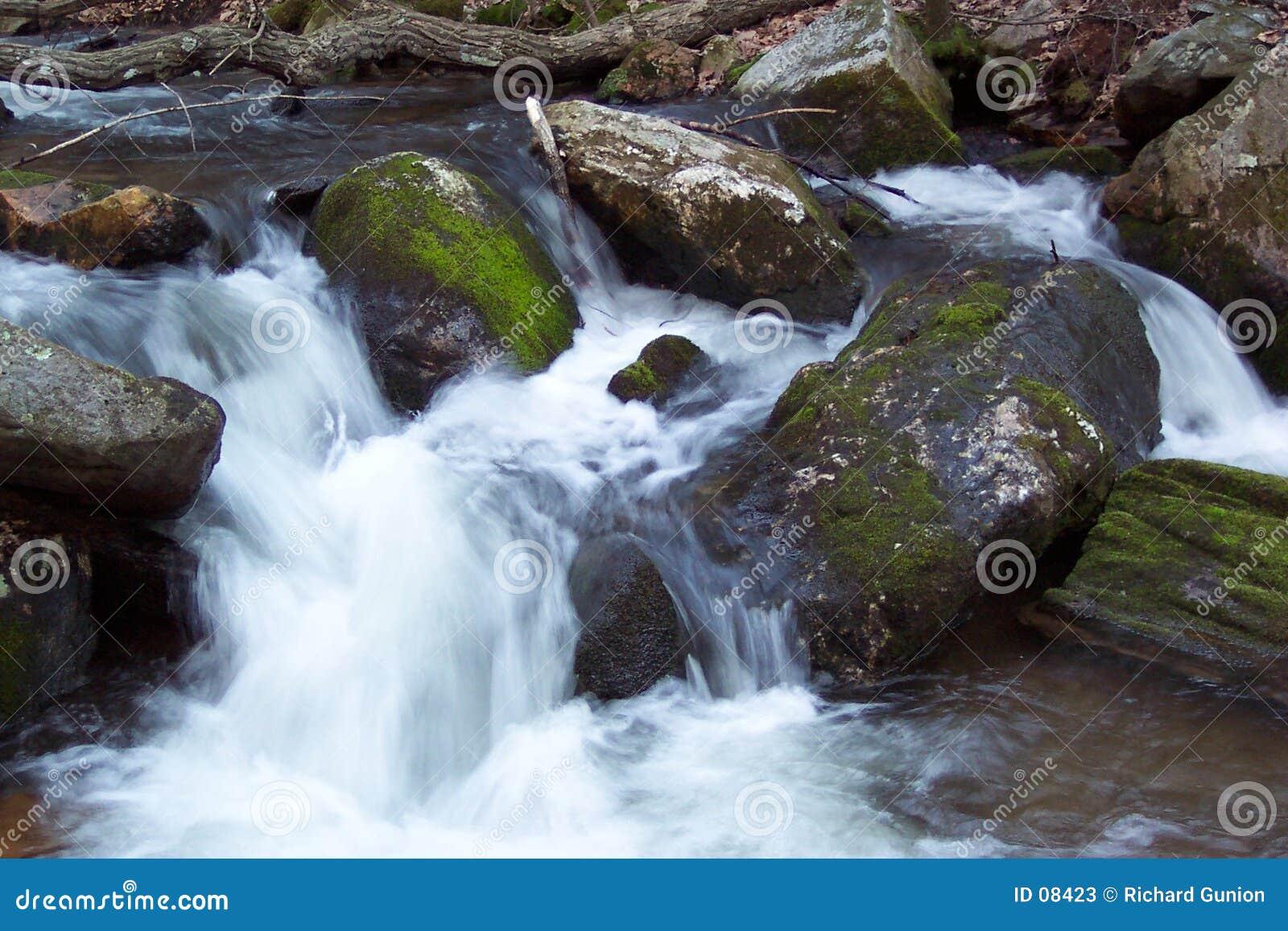 Flusso della trota