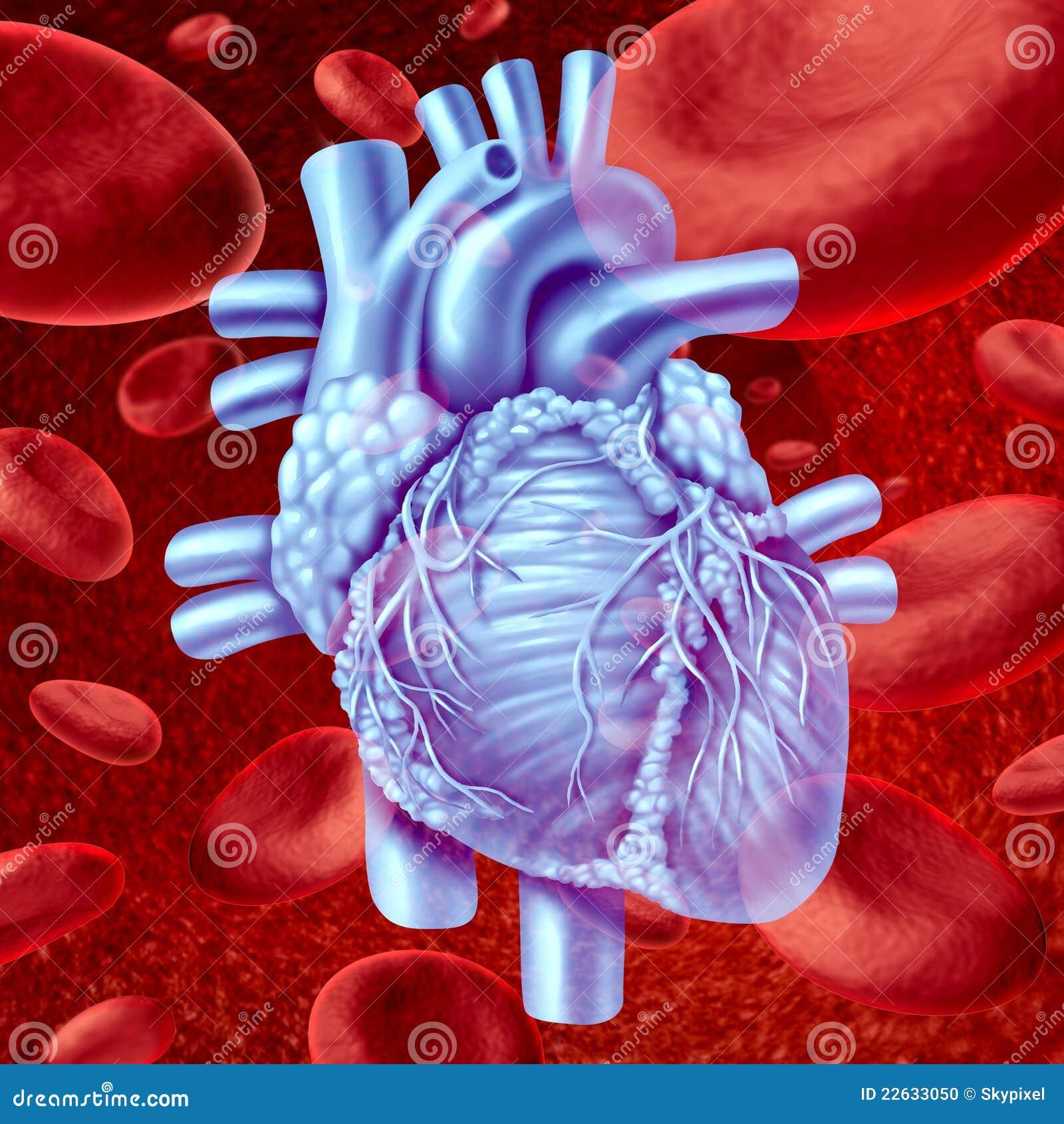 Flux de sang de coeur