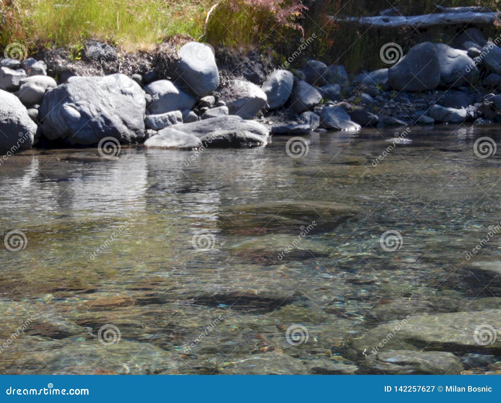 Fluxo calmo do rio