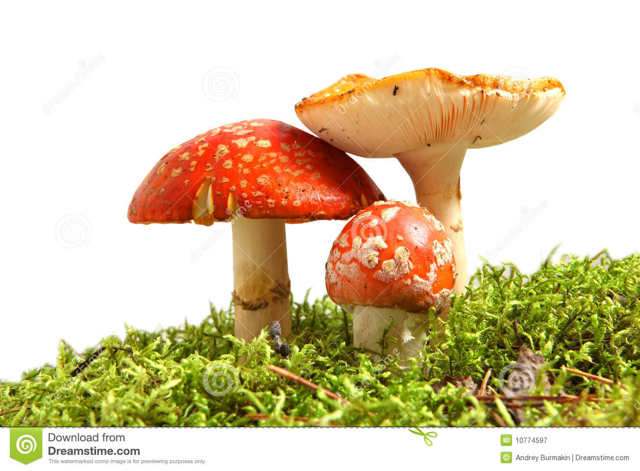 Download Fly agaric stock image. Image of toadstool, fairy, macro - 10774597
