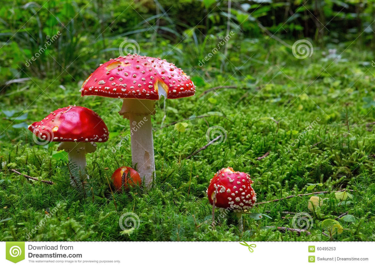 Download Fly-agaric in forest . stock image. Image of inedible - 60495253