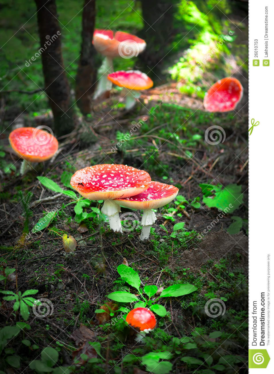 how to eat fly agaric mushrooms