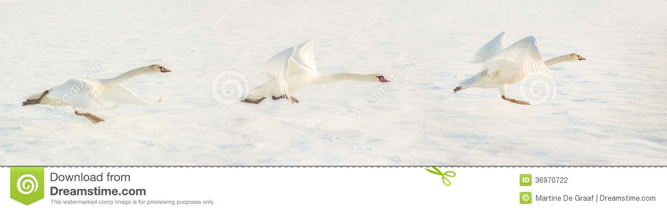 Download Fly away stock photo. Image of snowy, light, compilation - 36970722