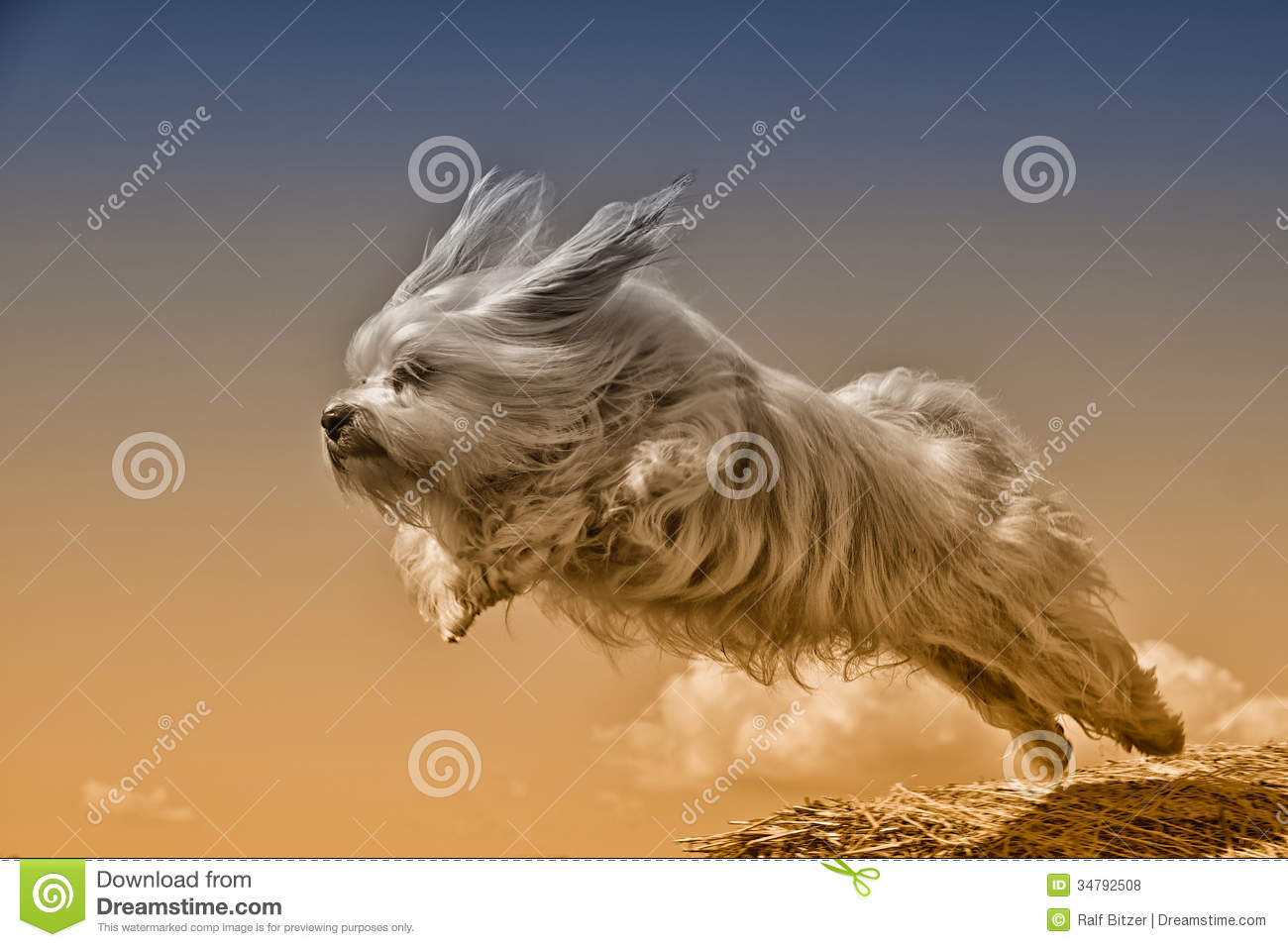 Fly dog fly stock photo image of animal long best for Best airline to fly dogs