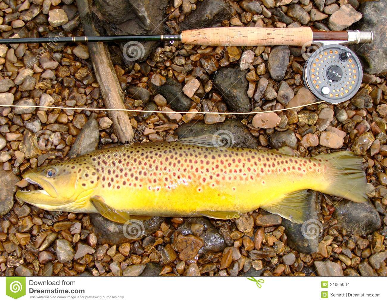 fly fishing, fly rod, reel and large brown trout stock images, Fly Fishing Bait