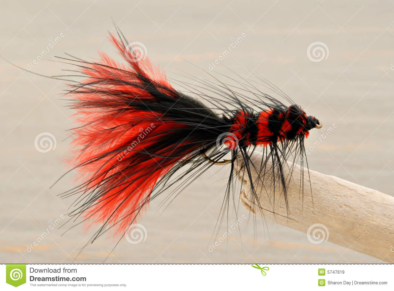 Fly fishing lure royalty free stock images image 5747619 for Dragonfly fishing lure