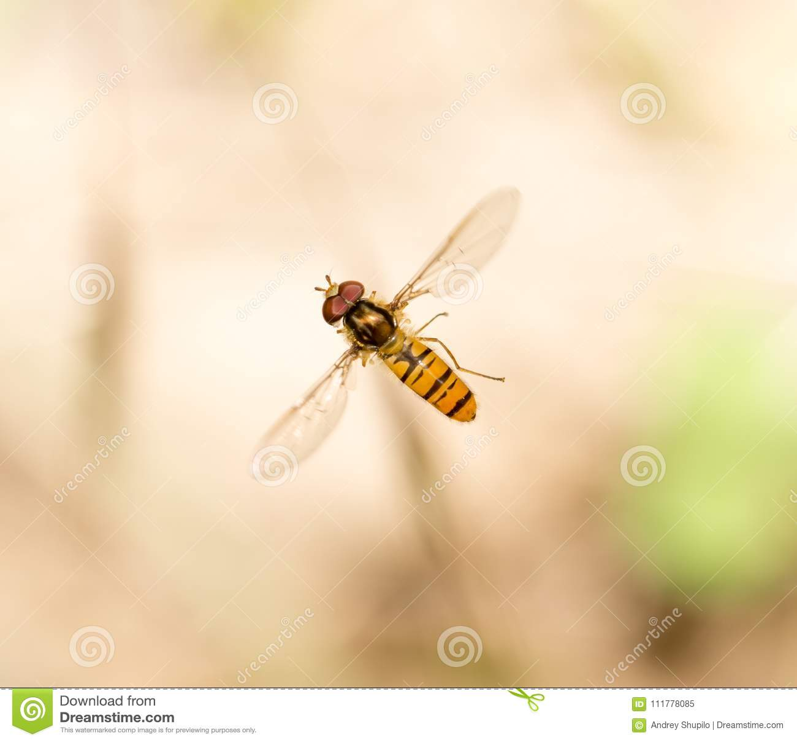 Fly in flight in nature. macro