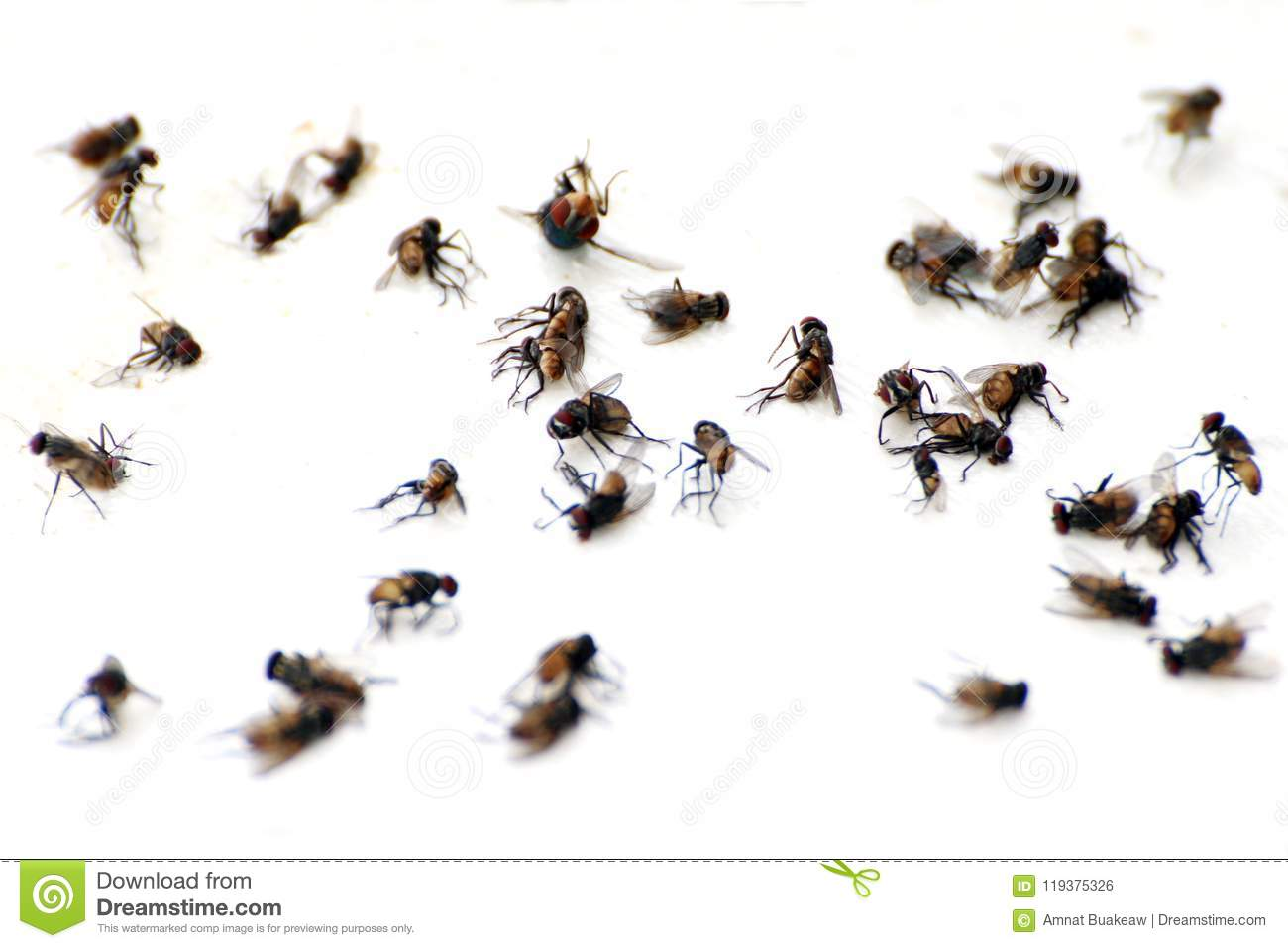 Fly, pile fly, many the bulk of the flies fly dead on white ground, flies are carriers of typhoid tuberculosis selective focus