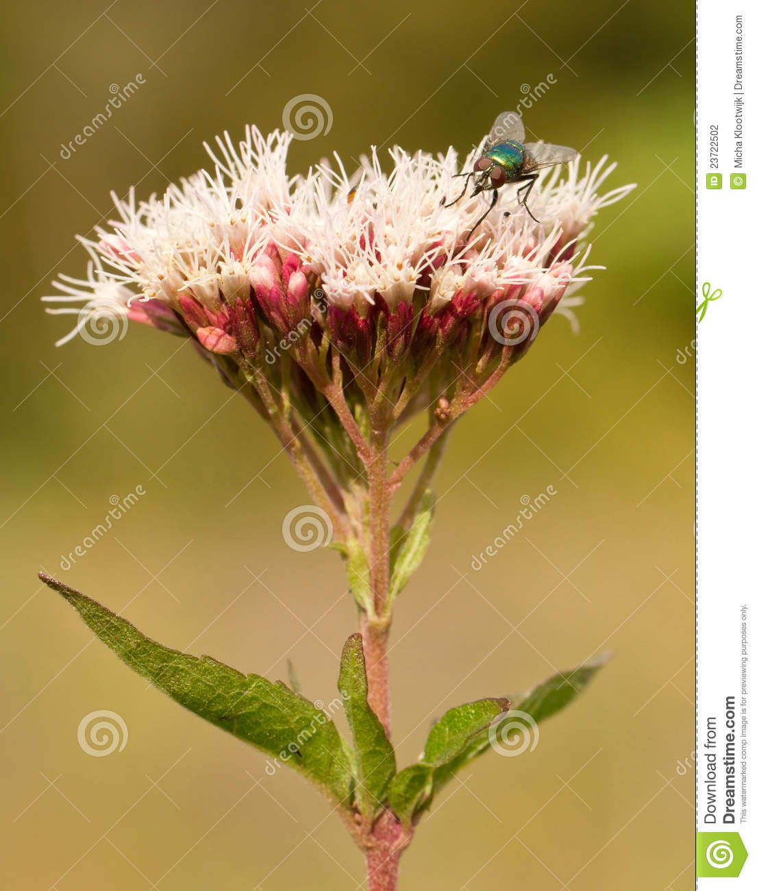 A fly on a pink flower