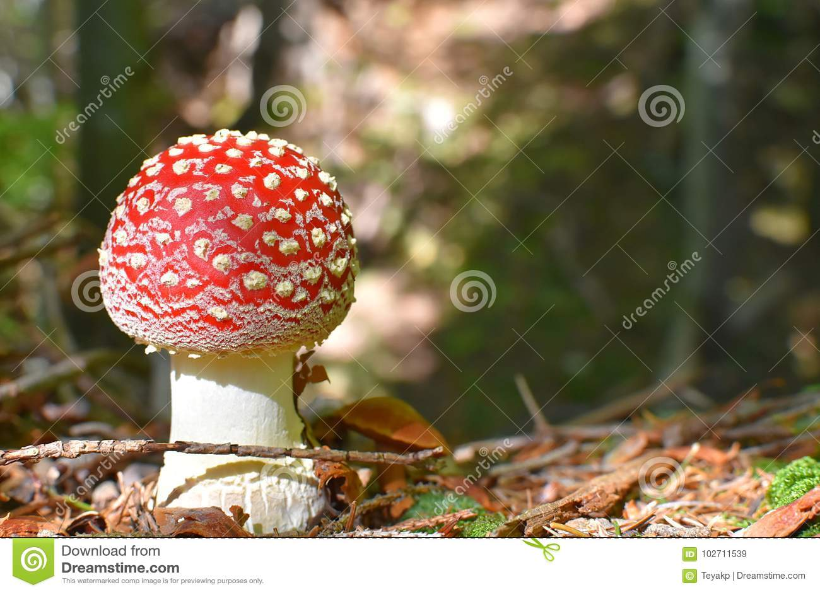 Flyagaric mushroom